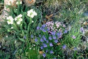National Park Service, Rocky Mountain National Park Alpine Flower